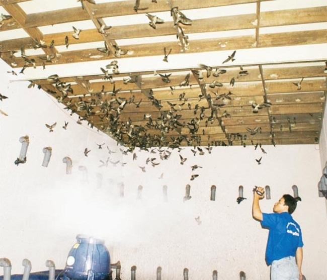 ắp máy phun sương cho nhà yến tại Đà Nẵng