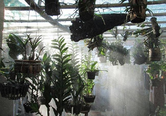 lắp máy phun sương tưới lan tại Đà Nẵng