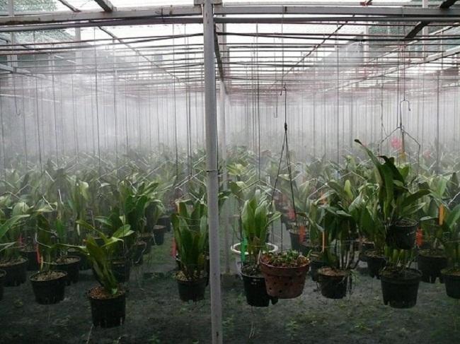 lắp máy phun sương tưới lan tại Phú Quốc