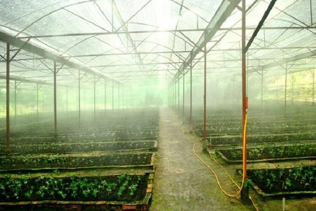 phun sương áp cao