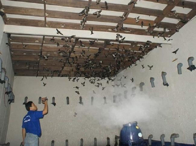 lắp máy phun sương cho nhà Yến tại Phú Quốc