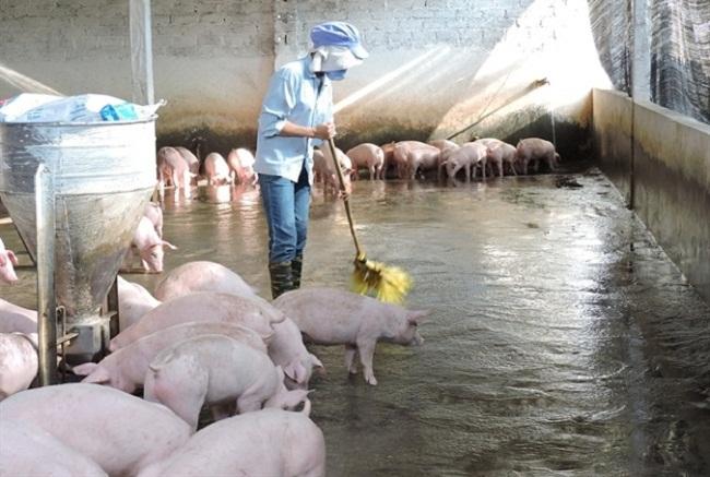xử lý mùi hôi trang trại