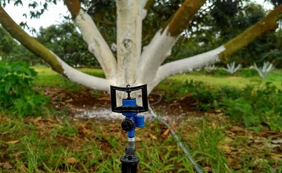 hệ thống tưới phun sương cho cây sầu riêng giá rẻ chất lượng tại TpHCM